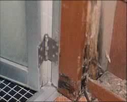 白蟻被害⑦